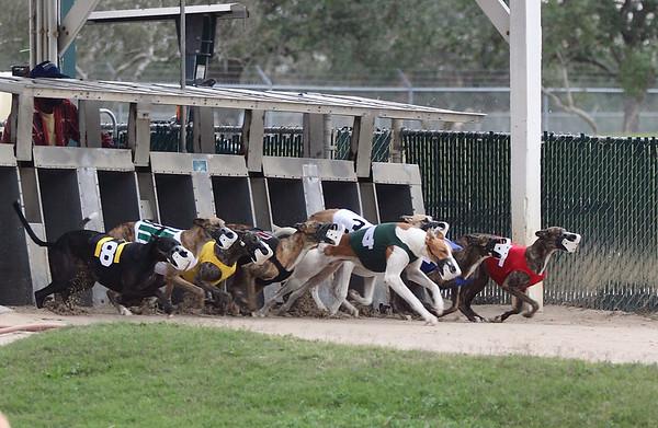 Gulf Greyhound Park